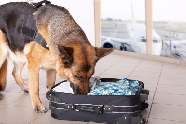 Drug dogs can be found in airports around the world.