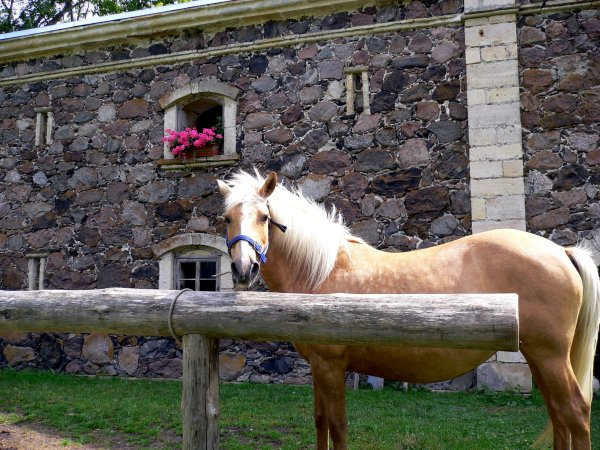 When a priest visits a sick man, he observes his horse. If the horse hangs its head down, it is said that the sick person will never recover.