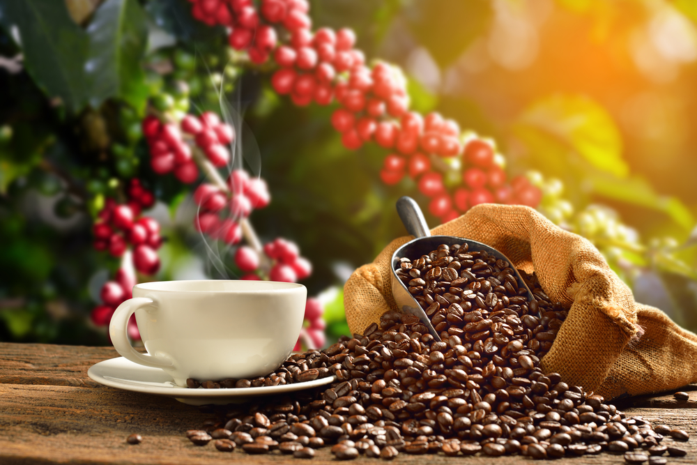 Coffee is a top crop.