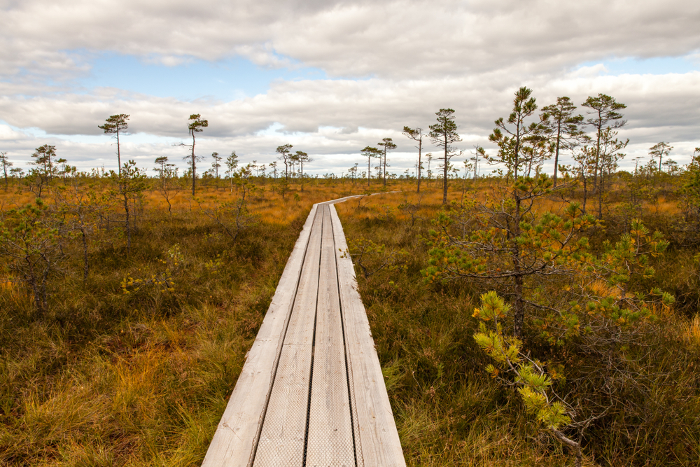 A boardwalk cuts through a boggy marshland in Soomaa National Park. Estonia is a low-lying country with an average altitude only reaching to 50 meters.