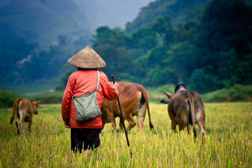 All regions of Vietnam experience tropical conditions.