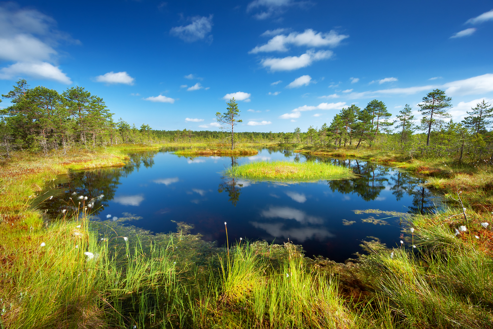 Bogs in Lahemaa National Park. Estonia's terrain is marshy lowlands, with flat regions in the north and hills in the south.