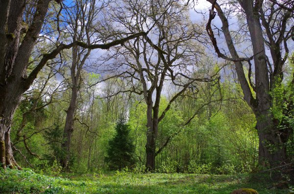 Although the worship of sacred groves and trees has ceased, there are still about 500 sacred groves in Estonia today.