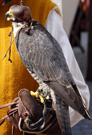 The Emirati love for falconry is famous.