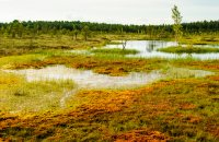Soomaa National Park is primarily comprised of grasslands, bogs, forests, and rivers.
