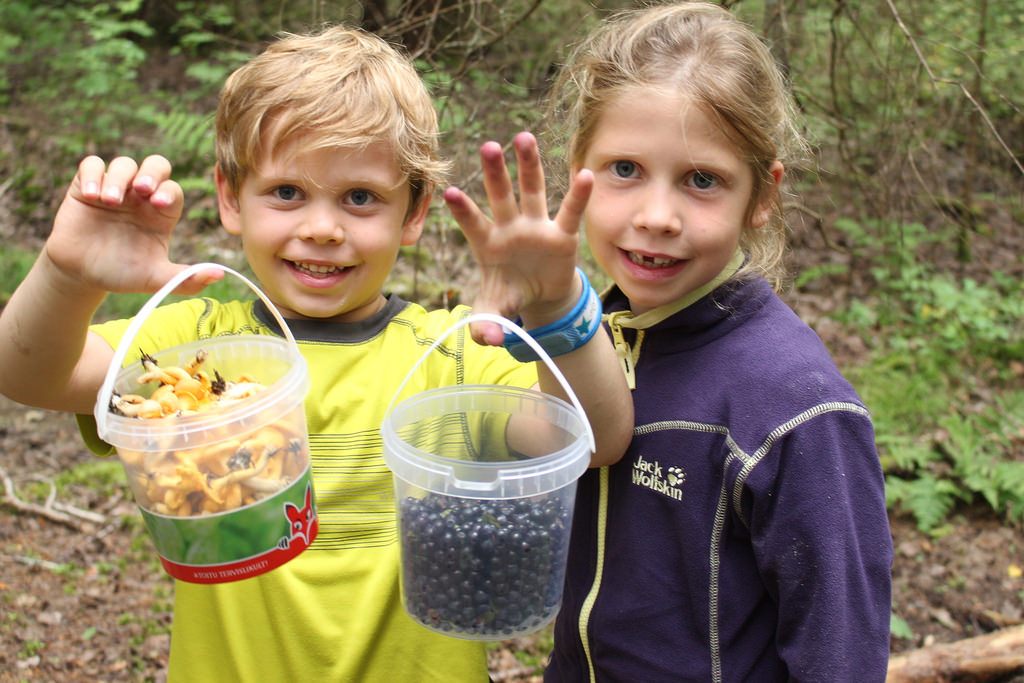 Wild berries and mushrooms are plentiful in Estonia.
