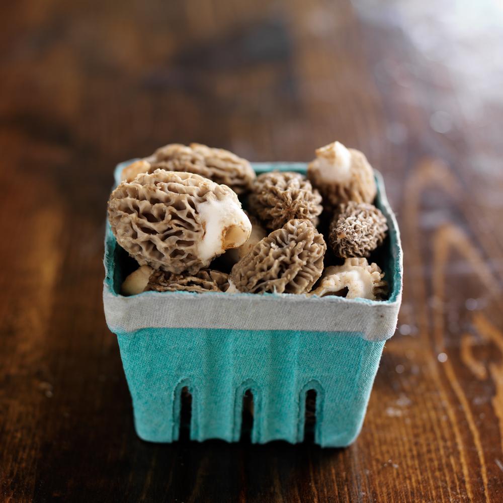 Fresh Morel Mushrooms