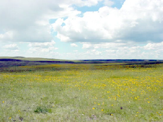 Glaciated Northern Grasslands