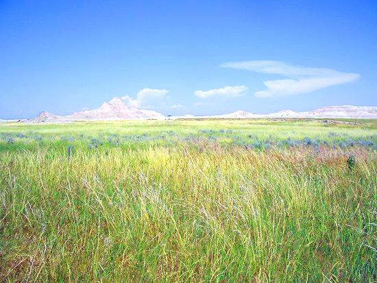Plains Grasslands
