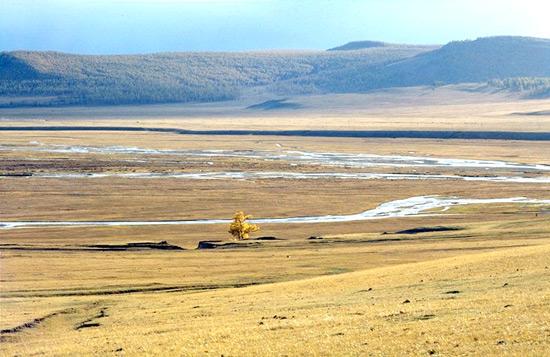 Mountain Grasslands