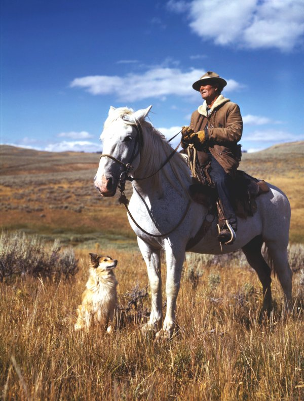 Shepherd On Horseback In Madison County