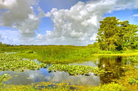 Humid Tropical Domain