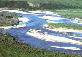 Upper Yukon Tayga