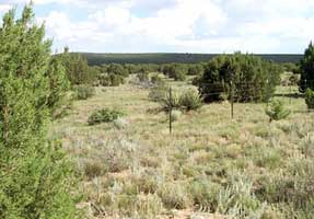Southwest Plateau and Plains Dry Steppe and Shrub