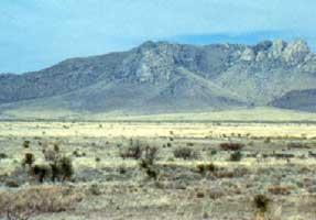 Tropical / Subtropical Desert Division