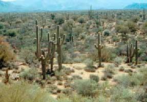 American Semidesert and Desert