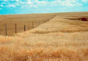 Great Plains Steppe