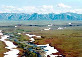 rooks Range Tundra--Polar Desert
