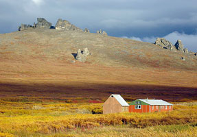 Seward Peninsula Tundra--Meadow