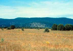 Arizona-New Mexico Mountains Semidesert--Open Woodland-- Coniferous Forest--Alpine Meadow