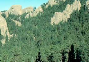 Black Hills Coniferous Forest