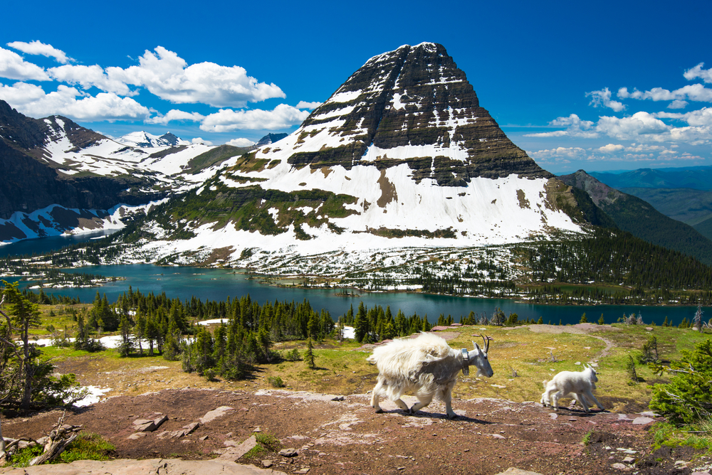 Glacier National Park includes dramatic scenery and regular sightings of wildlife.