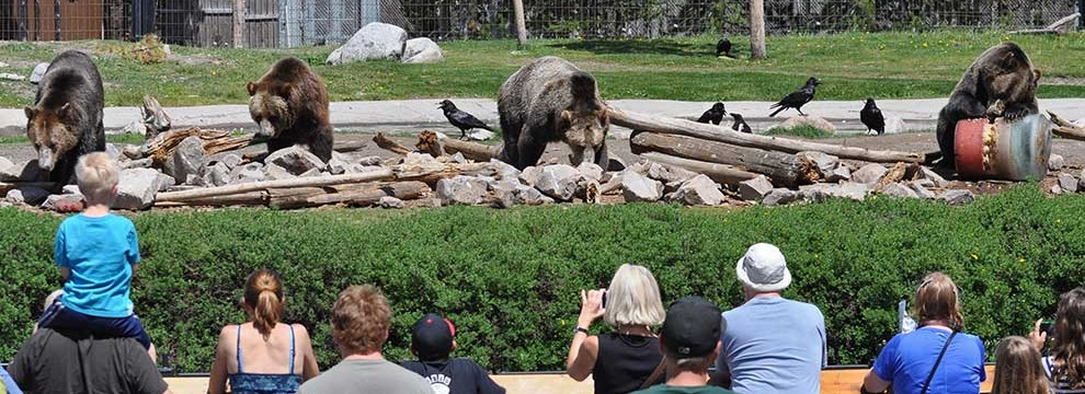 People watch bears at Grizzly and Wolf Discovery Center.