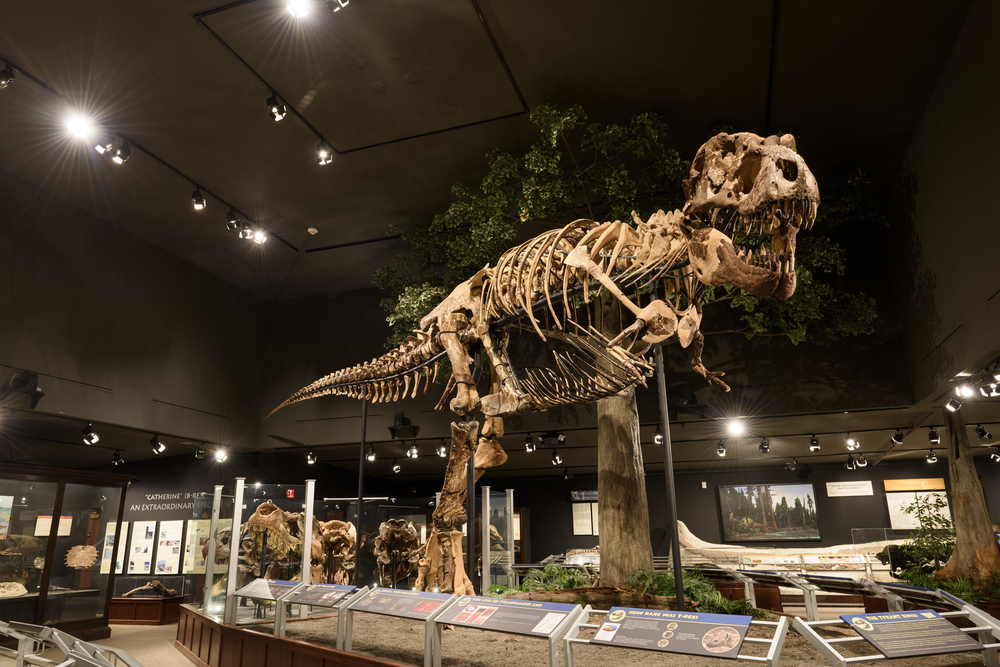 One of the world's largest collections of dinosaur fossils is at the Museum of the Rockies.