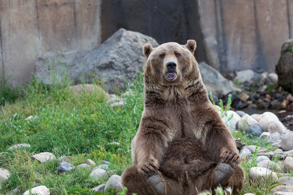 Brutus the Bear arrived at Montana Grizzly Encounter the size of a squirrel!