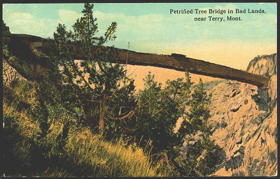 Perified Tree Bridge In Bad Lands, Near Terry, Mont.
